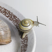 Snails on a ceramic plate — Stock Photo