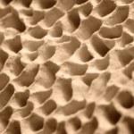 Mushroom pores — Stock Photo