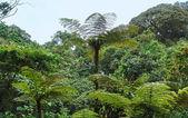 Vegetation in the Bwindi Impenetrable National Park — Stock Photo