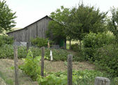 Allotment garden and utility shed — Stock Photo