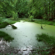 Overgrown tarn in the forest — Stock Photo