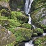 Idyllic Triberg Waterfalls — Stock Photo