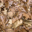Stock Photo: Sere brown autumn leaves