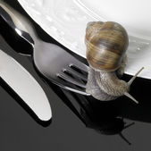 Grapevine snail creeping on dinnerware — Stock Photo