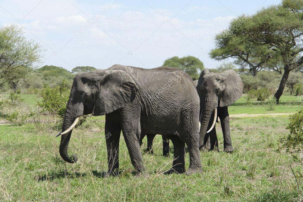 大象 动物 1023_682