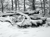 Snow covered pile of wood — Stock Photo