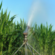 Stock Photo: Irrigation fields