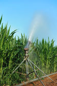 Irrigation fields — Stock Photo