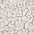 Arid earth — Stock Photo