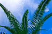 Tropikalny arkuszy — Zdjęcie stockowe