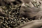 Coffee's grains — Stock Photo