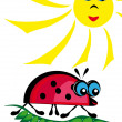 Stock Vector: Ladybird is heated on sun