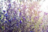 Beautiful blue flowers in sunlight — Stock Photo