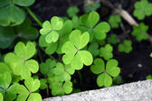 Flower, green, — Stock Photo