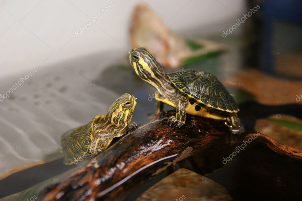 TARTARUGA , turtle,   Stock Photo #7123618