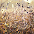 The spider web — Stock Photo #7468840