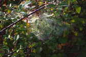The spider web — Stock Photo