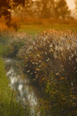 River landscape field — Stock Photo