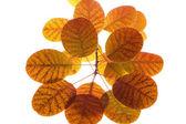 упадите листья на белый — Стоковое фото