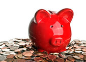 Pig, money, and savings — Stock Photo