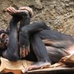 Yoga monkey — Stock Photo #6988017