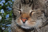 猫の夢 — ストック写真