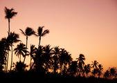 Paradise during sunset — Stock Photo