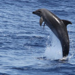 Jumping dolphin — Stock Photo #7381258