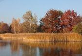 Natura in autunno — Foto Stock