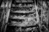 Iron steps black and white — Stock Photo