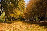 Golden autumn park — Stock Photo