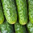Background of the cucumbers. — Stock Photo