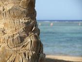 The palm tree invoice — Stock Photo