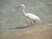 Bird, heron — Stock Photo