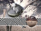 Koala animal — Stock Photo