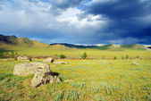 View of Central Mongolia — Stock Photo