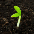 Seedling — Stock Photo