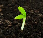 Seedling — Stock Photo