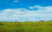 Mongolian view — Stock Photo