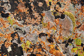 Stone surface with lichens — Stock Photo
