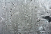 Hoarfrost — Stock Photo