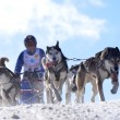 Stock Photo: Dog sledging