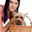 Girl with yorkshire terrier - Foto Stock