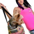 Young woman with a small dog — Stock Photo