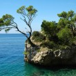 Island and trees in Croatia - nature vacations background - Foto Stock