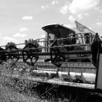 Combine harvesting — Stock Photo