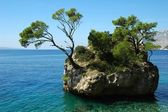 Island and trees in Croatia - nature vacations background — 图库照片