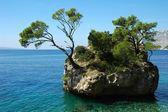 L'île et des arbres en croatie - fond de vacances nature — Photo