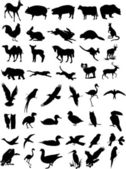 Animal silhouettes vector — Stock Vector