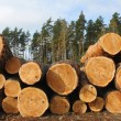 Pine logs — Stock Photo #7672126